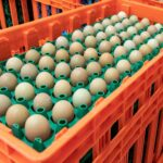 Learn more about pheasant eggs